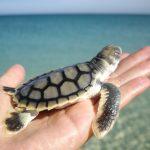 Karijini NP & Ningaloo Reef: viva le west coast!
