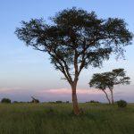 Markten in Oeganda + give-away Afrikaanse stof