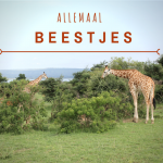 Allemaal beestjes – Op safari in Oeganda